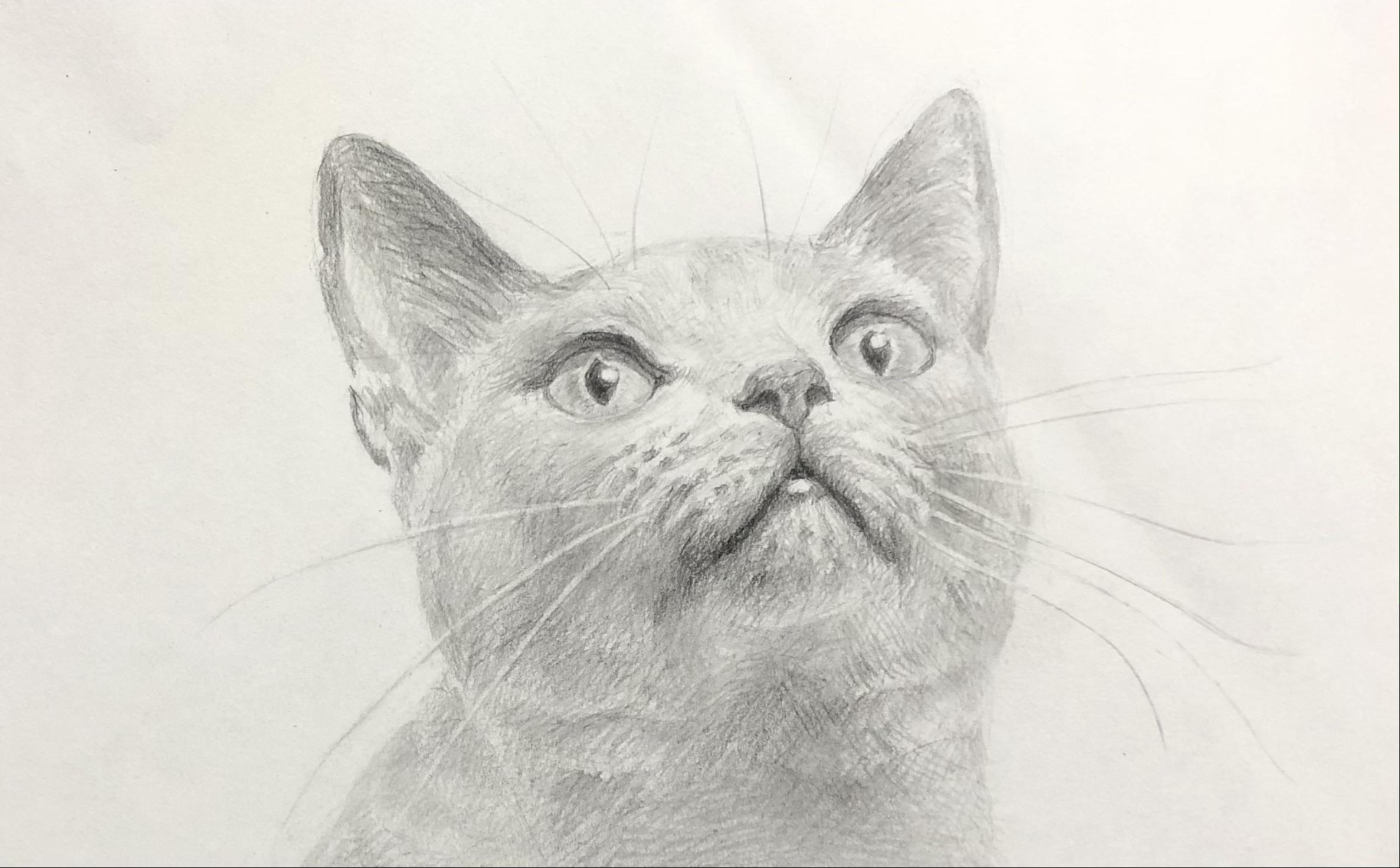 動物の絵の描き方を初心者にも簡単に解説!今回は「猫」の描き方を見ていきます。